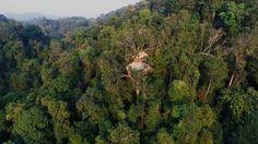 The Gibbon Experience - Laos