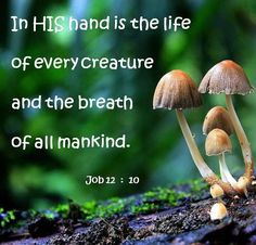 Job 12:10. In His hand is the life of every creature and the breath of all mankind
