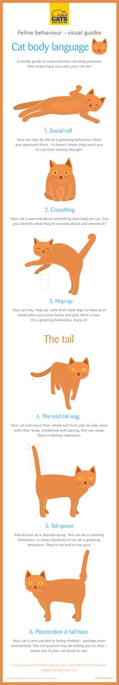 Handy Infographics To Help Humans Understand the Often Baffling Behavior of Their Beloved Cats