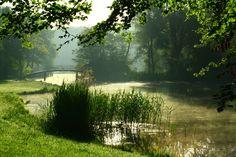 Prachtige foto van Fronz Photoblog van een zomerse junidag in het haagse bos den haag