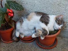 No garden, no problem...