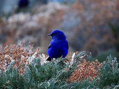 13 des plus beaux oiseaux du monde dont le plumage est une explosion de couleurs Ara Hyacinthe, Plumage, Dame Nature, Animals, Beautiful Birds, Colors, Animales, Animaux, Animal