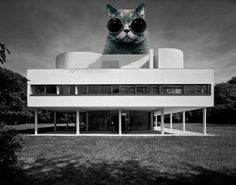 The Invasion of Architectural LOLCats - Le Kittenusier