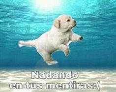 All Meme, Stupid Memes, Dankest Memes, Funny Memes, Animal Memes, Funny Animals, Cute Animals, Funny Spanish Memes, Cute Love Memes