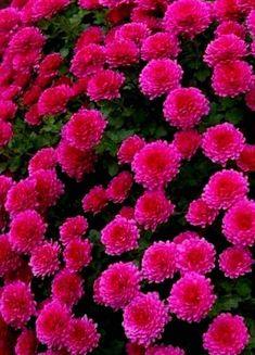 Good Morning, Flowers, Plants, Buen Dia, Bonjour, Florals, Bom Dia, Planters, Flower