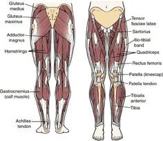 Diagram of upper leg muscles anatomy pinterest upper leg muscles in the leg for best results always work opposing body muscles or body parts ccuart Image collections