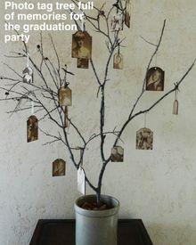 Memory tree, perfect for a #graduation party decoration { #home #decor #inspiration #DIY #photo #craft }