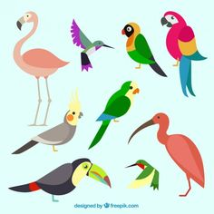 Collection of exotic and colorful bird Free Vector Pelican Drawing, Bird Quilt, Exotic Birds, Colorful Birds, Bird Drawings, Bird Pictures, Bird Barn, Barn Owls, Pretty Art