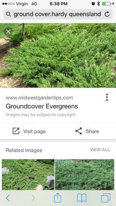 Juniperus ground cover Outdoor Dining, Dining Area, Outdoor Decor, Evergreen, Stepping Stones, Yard, Cover, Plants, Image
