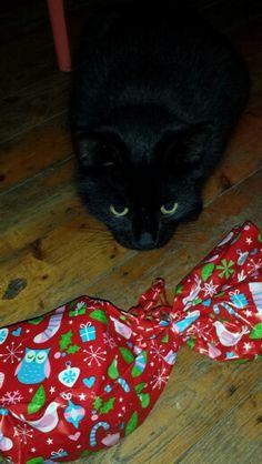Christmas cat :)