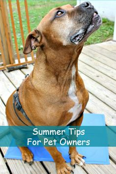 Summertime can be fun for your pet if done right. Here are 4 fun summer tips for pet owners to keep your pet safe.