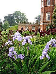 "Traditional Iris ""Jane Philliips"" at Brocket Hall"