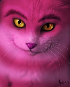 The Cheshire Cat Photo: The real Cheshire Cat Cheshire Cat Art, Chesire Cat, Disney Designs, Cat Character, Unique Cats, Were All Mad Here, Cat Colors, Through The Looking Glass, Color Rosa