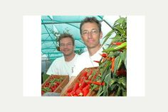 There is so much more to a chilli than heat   Exeter Express and Echo