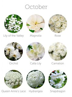SOME OF MY FAVES!! ❤️MAGNOLIAS & SNAPDRAGON. LILLY OF THE VALLEY AND QUEEN ANNS LACE ❤️wedding flowers in season - october