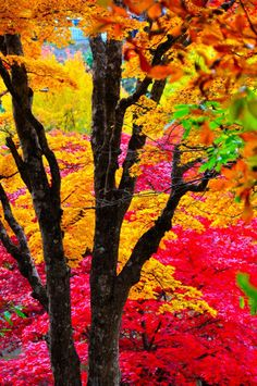 Autumn Colors of Japan