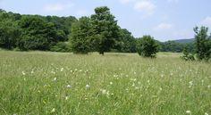 Magerwiesen beheimaten eine bunte Blumenvielfalt und damit auch viele Bienen und Schmetterlinge.