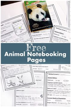 Learning Animals with Magic Tree House Books - peanut butter fish lessons Free Homeschool Curriculum, Homeschooling Resources, Magic Treehouse, Animal Science, Non Fiction, Animal Books, Science Activities, Summer Activities, Home Schooling