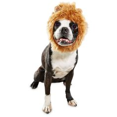 The Bootique Mane Event Lion Pet Costume turns your cat or dog into the jungle of royalty with its delightfully regal design. Whether you're just taking a Halloween selfie or heading to a pet costume party, you're both sure to have a roaring good time. Big Dog Halloween Costumes, Best Dog Costumes, Halloween Costume Accessories, Pet Costumes, Holiday Costumes, Halloween Party, Regal Design, Mane Event, Funny Pictures For Kids
