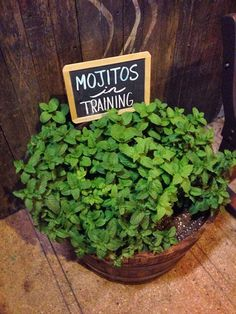 """Spotted outside a local restaurant."" Sign for a pot of mint."