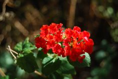 Spanish flag in the gardens of Hidden Valley glamping site www.hiddenvalleyandalucia.co.uk