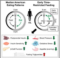 The Critical Importance of Time Restricted Feeding in Weight Loss