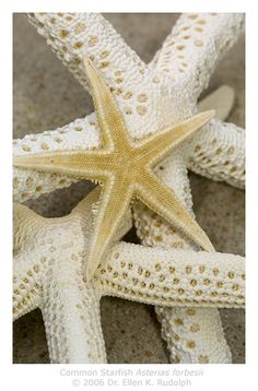 "Starfish - I still love the story of casting back the starfish stranded on the shore... ""What difference can it make to save one starfish when there are miles of beach and thousands of stranded starfish.""......""It matters to this one."