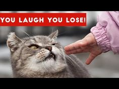 IF YOU LAUGH, YOU LOSE Funniest Animal Compilation 2017   Funny Pet Videos - YouTube