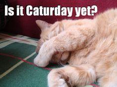 It sure is kitty!