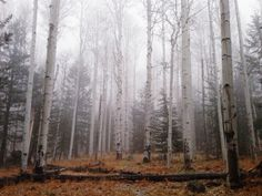Inner Basin Trail, Flagstaff, AZ // Hailey Golich Photography