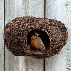Beautiful lightweight nest box is specially designed for robins. Acts as the ideal roosting spot while offering protection against harsh weather and predators. Garden Bulbs, Spring Bulbs, Nesting Boxes, Gifts For Nature Lovers, Spring And Fall, Hostess Gifts, Entryway Decor, Bird Houses, Tree Decorations