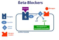 Beta-blockers will decrease heart rate but fortunately are unlikely to bring an otherwise healthy toddler's heart rate below its intrinsic rate. Of greater concern are the development of hypoglycemia due to blockage of glycogenolysis and depression in mental status in the more lipid soluble agents that cross the blood-brain barrier.
