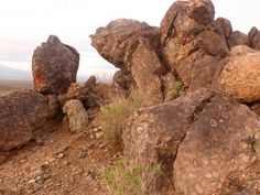 Arizona Orbicular Granite