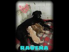 Casa dos Anjos - Ravena e seus babys!!! - YouTube