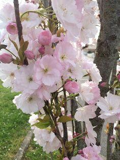 enfantsetart@blogspot.com: Week-end rallongé et détente au soleil ....découve...
