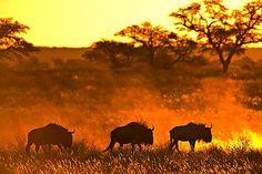 The perfect Wildlife Wednesday! The rich wildlife of the Kalahari