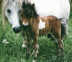 It's a a cute a horse with it's baby