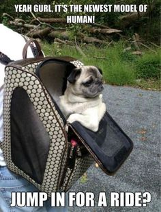 Newest Model - funnydogsite.com #dogs #funny #cute