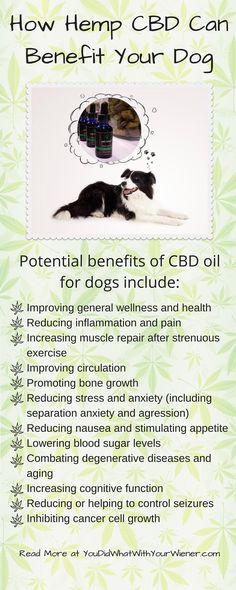 Benefits of CBD for your dog