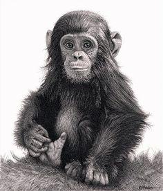 Realistic Animal Pencil Drawings (25)