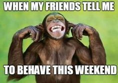 Funny Chimpanzee Im Not Listening. Funny Happy Birthday Song, Birthday Songs, Birthday Quotes, Monkey Smiling, Facebook Timeline Covers, Chimpanzee, Orangutans, Fb Covers, Cover Photos