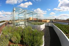 Garden on the rooftop: Copernicus Science Centre