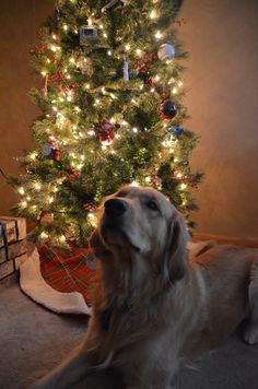 Cooper's Christmas Picture...love my boy!