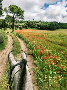 Trail riding through wild flowers Pretty Horses, Horse Love, Beautiful Horses, Trail Riding Horses, Horse Riding, Horse Ears, Dressage Horses, Horse Photos, Jolie Photo