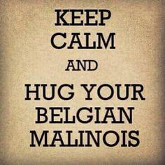 My heart dog Malinois Puppies, Belgian Malinois Dog, Belgian Shepherd, German Shepherd Dogs, I Love Dogs, Puppy Love, Belgium Malinois, Dog Commands, Most Beautiful Dogs