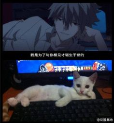 Anime guy...or cat...amime guy...or cat...ANIME GUY..OR CAT?!!!?