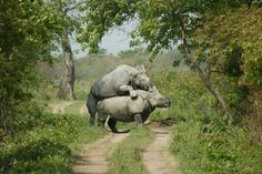Explore Assam, India with us. Contact us for wildlife tours in Northeast India. www.neroutes.com