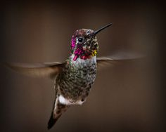 A cool shot of an Anna's hummingbird submitted to our monthly photo challenge.