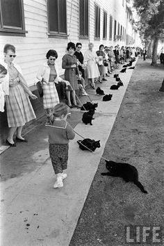 An audition for black cats was held. | 35 Magical Moments Captured With A Camera
