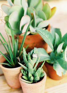 terra cotta pots and succulents.